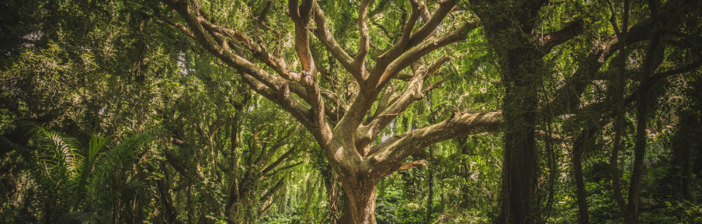 You Are Growing: Empowering your Inner Wood Element